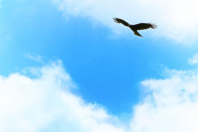 図南の翼のイメージ画像